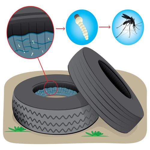dengue-pic7.jpg