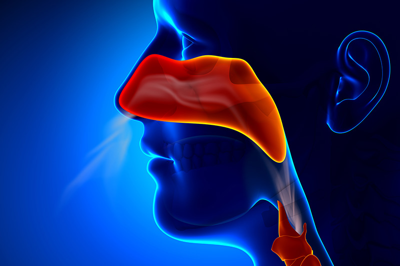 Sinus, Endoscopic Surgery, Treating Sinus